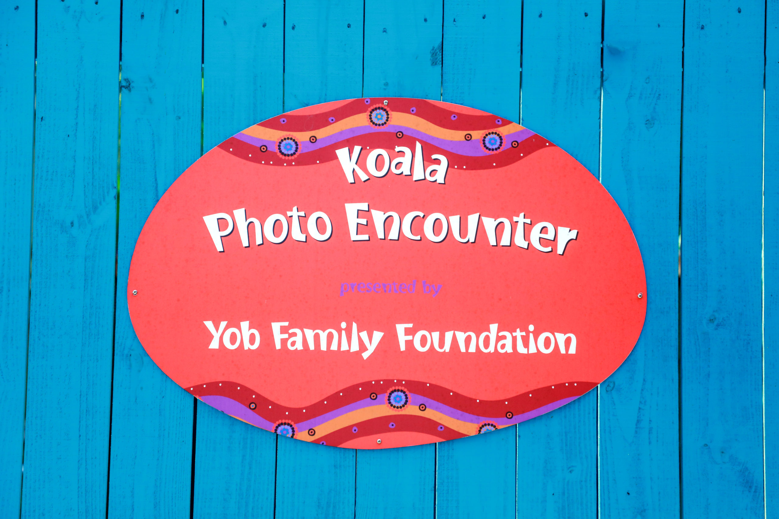 Koala Encounter - Jon Yob